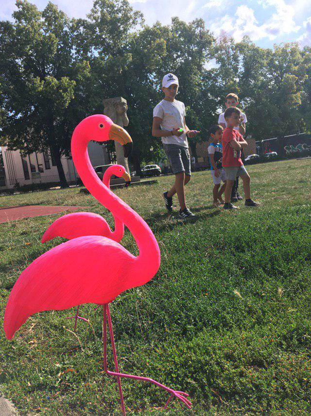 Neustadt Flamingo